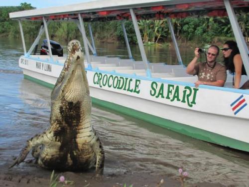 Jungle Crocodile Safari - Discover The Crocs!
