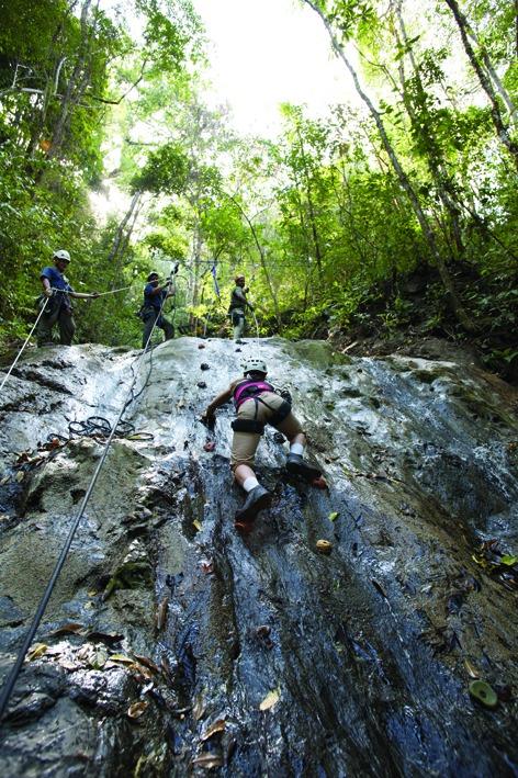 Aerial Tram Rainforest Adventure (21)