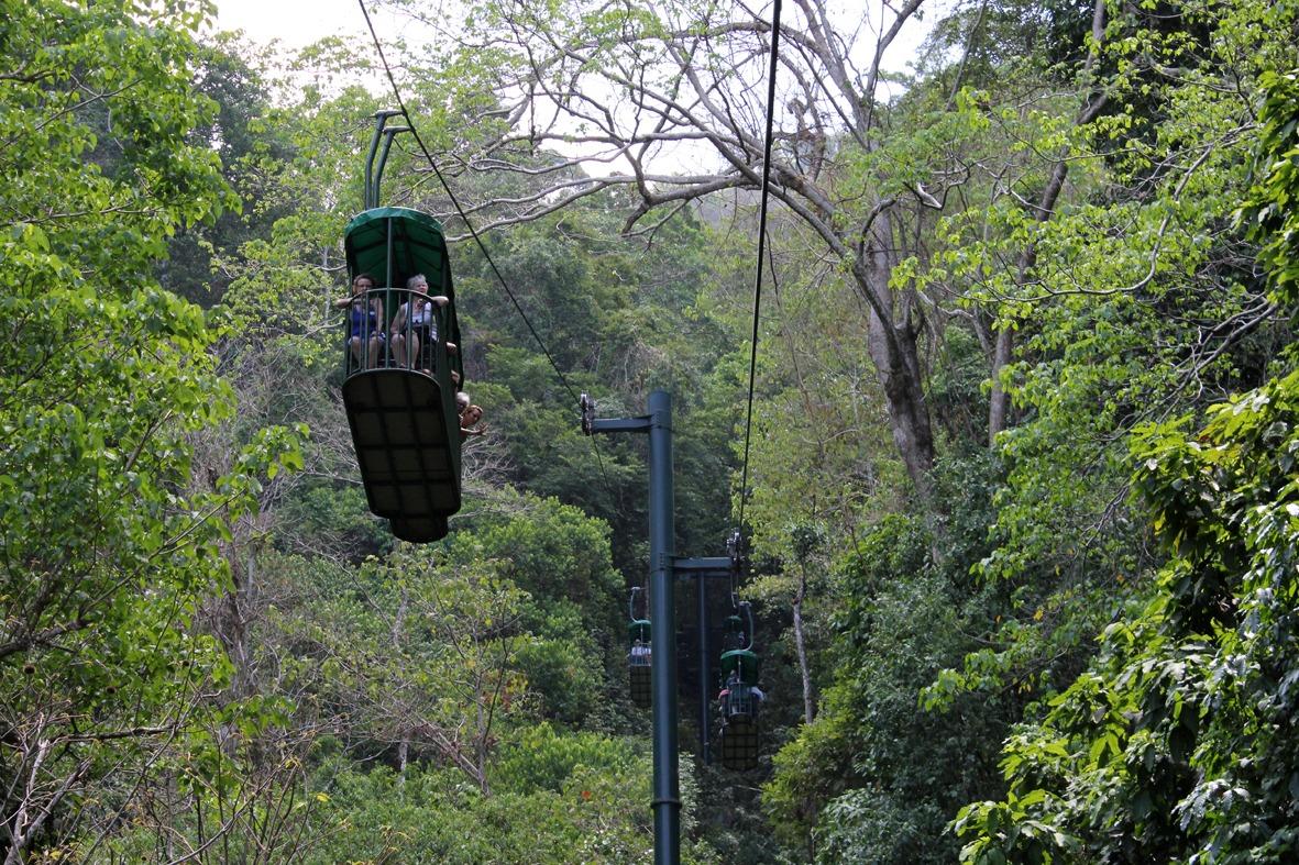 Aerial Tram Rainforest Adventure (39)