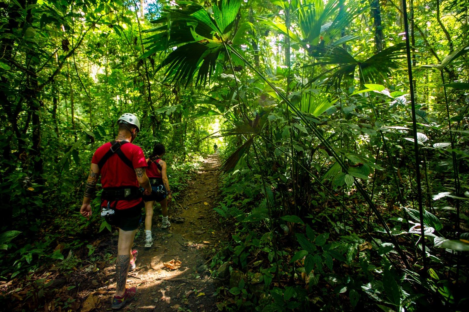 Aerial Tram Rainforest Adventure (6)