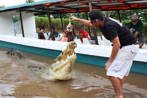 Jungle Crocodile Safari (1)