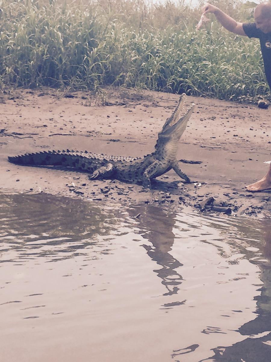 Jungle Crocodile Safari (10)