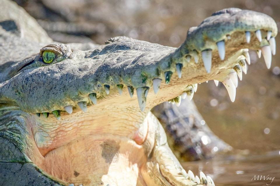 Jungle Crocodile Safari (11)