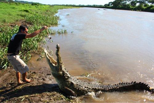 Jungle Crocodile Safari (2)