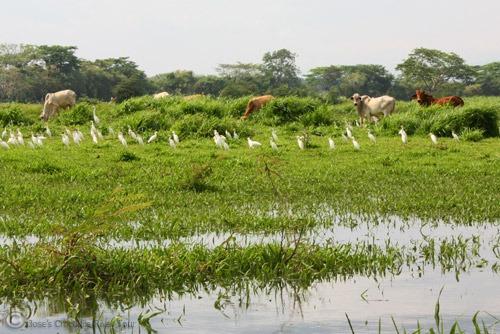 Jungle Crocodile Safari (20)