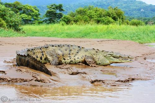 Jungle Crocodile Safari (3)