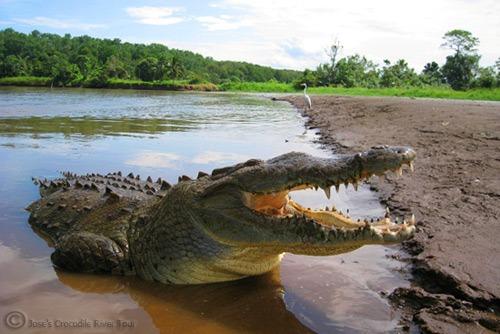 Jungle Crocodile Safari (5)