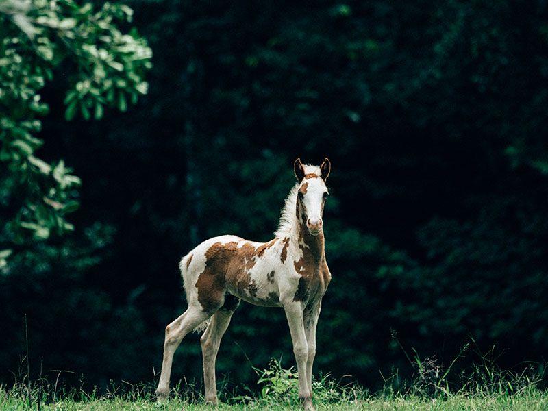 Tocori Waterfalls Horseback Tour (4)