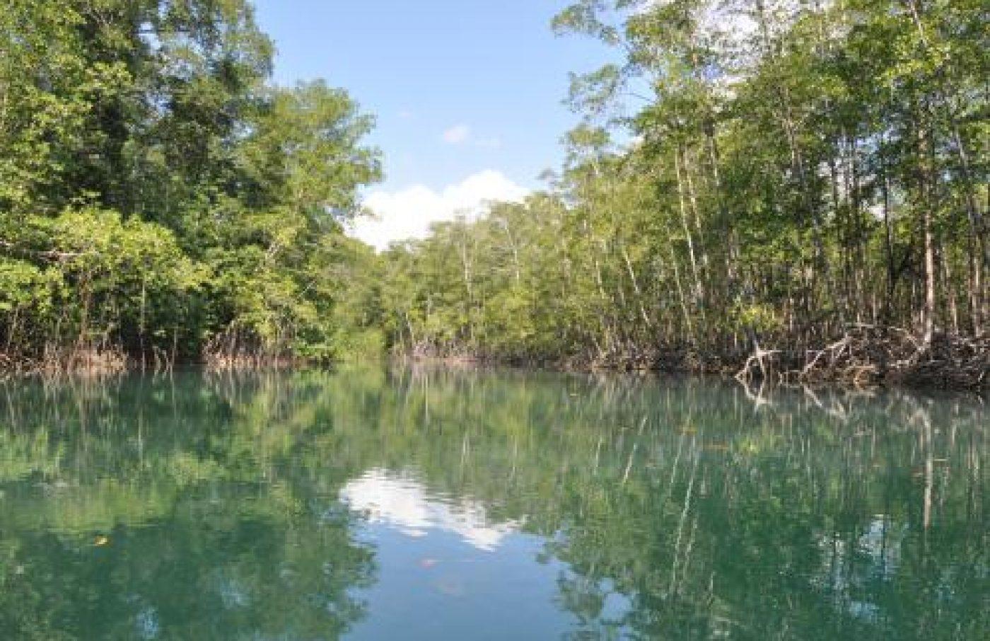 Island Mangrove and Monkey Tour