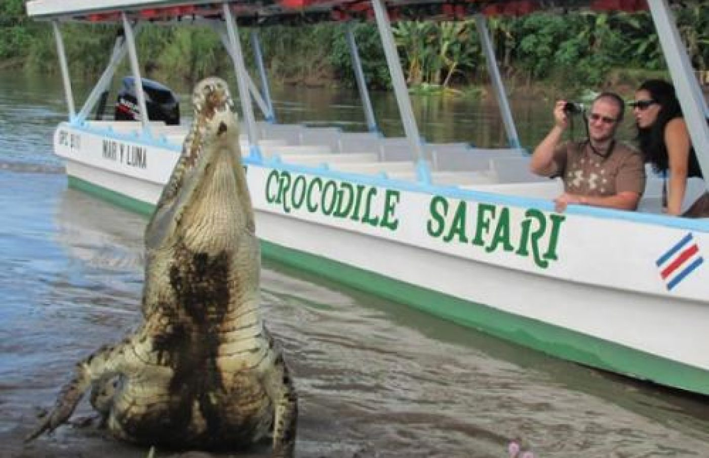Jungle Crocodile Safari - Discover The Crocs!