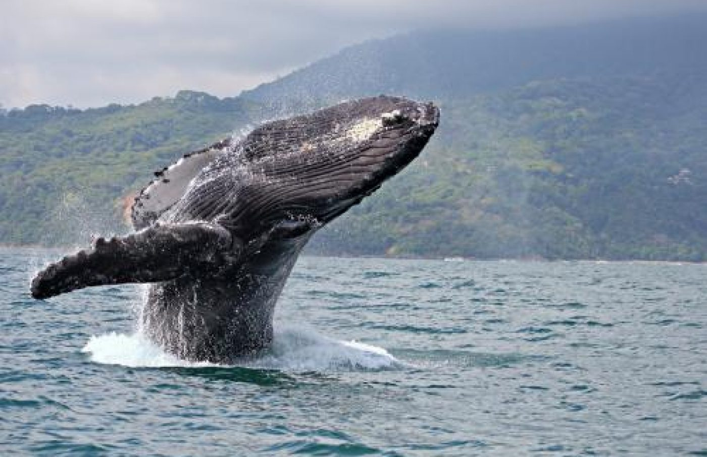 Whale Sightseeing Tour
